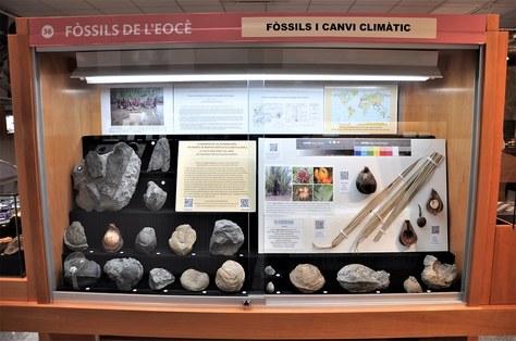 Nova vitrina al Museu de Geologia Valentí Masachs